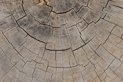 Fondo de madera de la textura Imagenes de archivo
