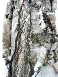 Fondo de madera de la textura del modelo de la corteza de árbol Fotos de archivo libres de regalías