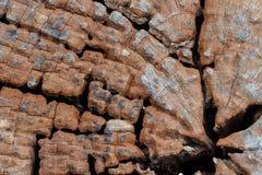 Fondo de madera de la textura del texturewood Fotografía de archivo