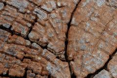 Fondo de madera de la textura del texturewood Fotografía de archivo libre de regalías