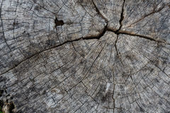Fondo de madera de la textura del texturewood Fotos de archivo