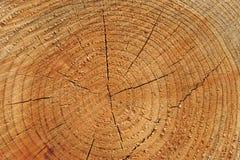 Fondo de madera de los anillos de árbol Foto de archivo libre de regalías
