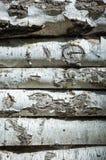 Fondo de madera del abedul, troncos con la corteza Imagen de archivo libre de regalías