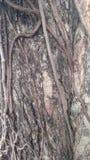 Fondo de madera de madera del contexto del modelo Foto de archivo libre de regalías