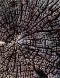 Fondo de madera del grunge de la textura Imagen de archivo libre de regalías