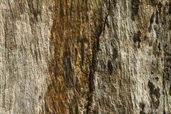 Fondo de madera del Grunge de la textura de Brown con el grano y las grietas Foto de archivo