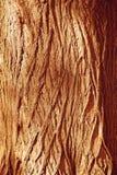 Fondo de madera del marrón del bosque del otoño Tre de madera del bosque de la textura Fotografía de archivo libre de regalías