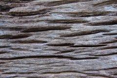 Fondo de madera del tocón Fotografía de archivo libre de regalías