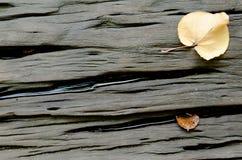 Fondo de madera duro con las hojas secadas Imagen de archivo libre de regalías