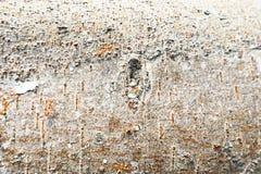 Fondo de madera de la textura del árbol del primer foto de archivo