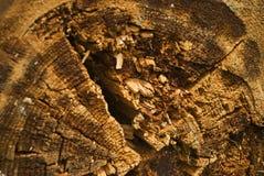 Fondo de madera putrefacto Imagenes de archivo