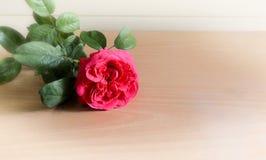 Fondo de madera de Redrose Imagen de archivo libre de regalías