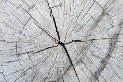 Fondo de madera Textura Tocón de árbol Imagen de archivo libre de regalías