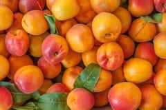 Fondo de muchos melocotones anaranjados en parada del mercado Imagenes de archivo