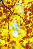 Fondo de oro del otoño del defocus Imagenes de archivo