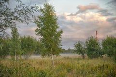 Fondo de oro de la hora de septiembre del bosque en la Rocca-al-yegua, naturaleza estonia Fotos de archivo