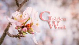 Fondo de oro de la semana Fotos de archivo libres de regalías