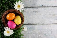 Fondo de Pascua con la hierba Fotografía de archivo libre de regalías