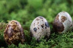 Fondo de Pascua con los huevos de codornices Imagenes de archivo