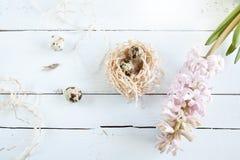 Fondo de Pascua con los huevos de codornices en jerarquía y jacinto rosado Foto de archivo libre de regalías