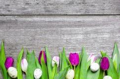 Fondo de Pascua con los huevos y los tulipanes púrpuras Fotografía de archivo libre de regalías