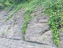 Fondo de piedra con la planta Foto de archivo