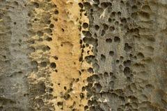 Fondo de piedra de la textura Foto de archivo