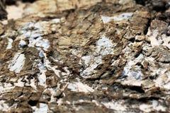 Fondo de piedra del primer de la textura Fotos de archivo