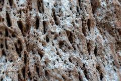 Fondo de piedra, pared rocosa que tiene una estructura porosa imágenes de archivo libres de regalías
