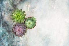 Fondo de piedra puesto plano floral de las plantas suculentas imagen de archivo