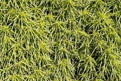 Fondo de plantas verdes naturales Fotos de archivo libres de regalías
