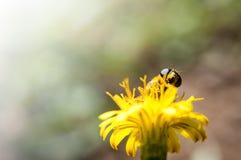 Fondo de polinización de la abeja Fotografía de archivo