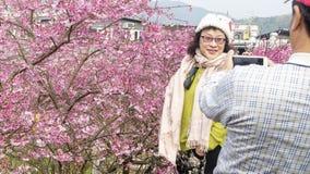 Fondo de Sakura Flower o de Cherry Blossom With Beautiful Nature fotos de archivo