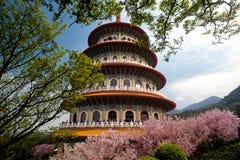 Fondo de Sakura Flower o de Cherry Blossom With Beautiful Nature fotografía de archivo