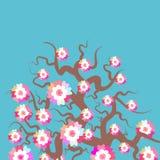 Fondo de Sakura Nature con la rama del flor de flores rosadas Colores en colores pastel de las ramas del cerezo de la tarjeta del Fotos de archivo libres de regalías