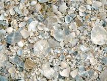 Fondo de shelles agrietados Fotografía de archivo libre de regalías
