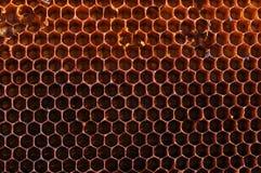 Fondo de textura de los panales de la abeja Foto de archivo libre de regalías