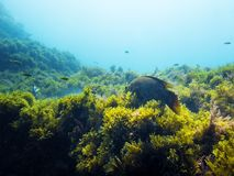 Fondo de un fondo del mar con los pescados y las algas imagenes de archivo