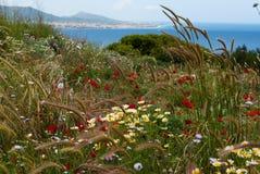 Fondo de wildflowers Imágenes de archivo libres de regalías