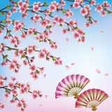 Fondo decorativo con sakura - cherr giapponese Immagine Stock