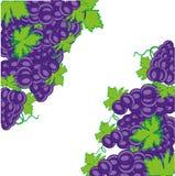 Fondo decorativo dall'uva matura su bianco illustrazione di stock