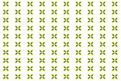 Fondo decorativo dalle foglie di Maranta tricolori Fotografie Stock