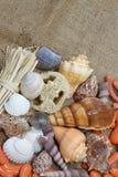 Fondo decorativo de las conchas marinas Imagen de archivo