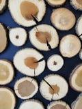 Fondo decorativo del ?rbol natural imagenes de archivo