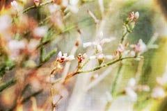 Fondo decorativo del papel pintado del Wildflower con textura imagenes de archivo