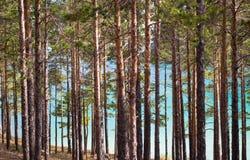 fondo degli alberi Immagini Stock