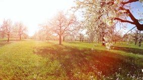 Fondo degli alberi della molla di estate di tramonto degli alberi della molla della depressione di volo stock footage