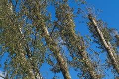 Fondo degli alberi forestali Fotografia Stock Libera da Diritti