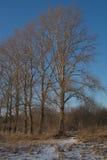Fondo degli alberi forestali Fotografie Stock Libere da Diritti