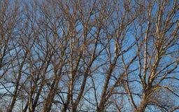 Fondo degli alberi forestali Fotografia Stock